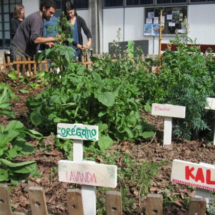 Resignificando espacios: la iniciativa Huerto-Pileta de Sociales