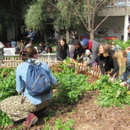 Ensalatón: compartiendo los frutos del Huerto-Pileta